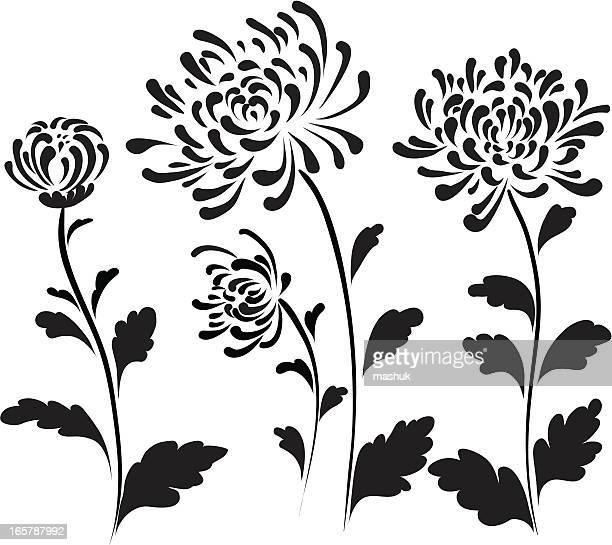 菊 - キク科点のイラスト素材/クリップアート素材/マンガ素材/アイコン素材