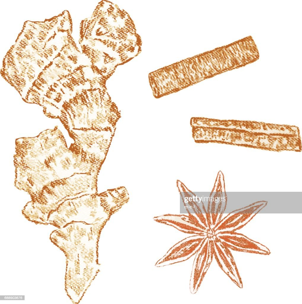 Cinnamon sticks, ginger, anise isolated white background, hand drawn sketch vector decorative graphic texture spice, food ingredient for healthy market, restaurant menu, cosmetic, harvest