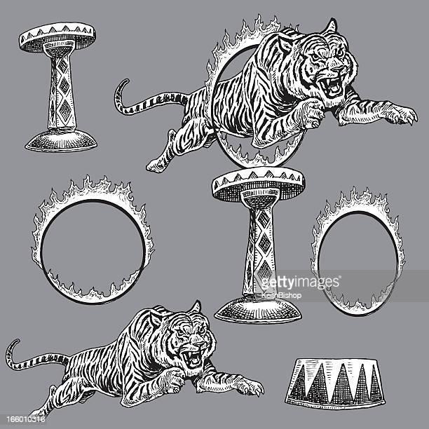 Circus Tigre et Flaming Anneau de feu