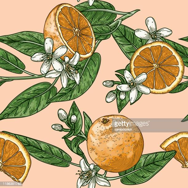 illustrations, cliparts, dessins animés et icônes de citrus et orange blossom vintage retro style seamless pattern - fleur tropicale