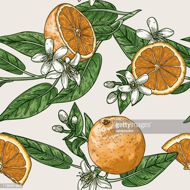 citrus and orange blossom vintage retro style seamless pattern - orange color stock illustrations
