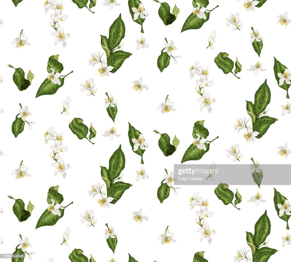 Citrus branches seamless pattern with flowers and leaves. Flowers of orange, lime, lemon and others