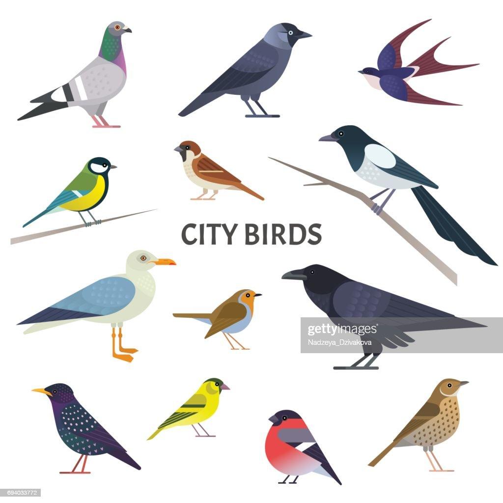 City birds.