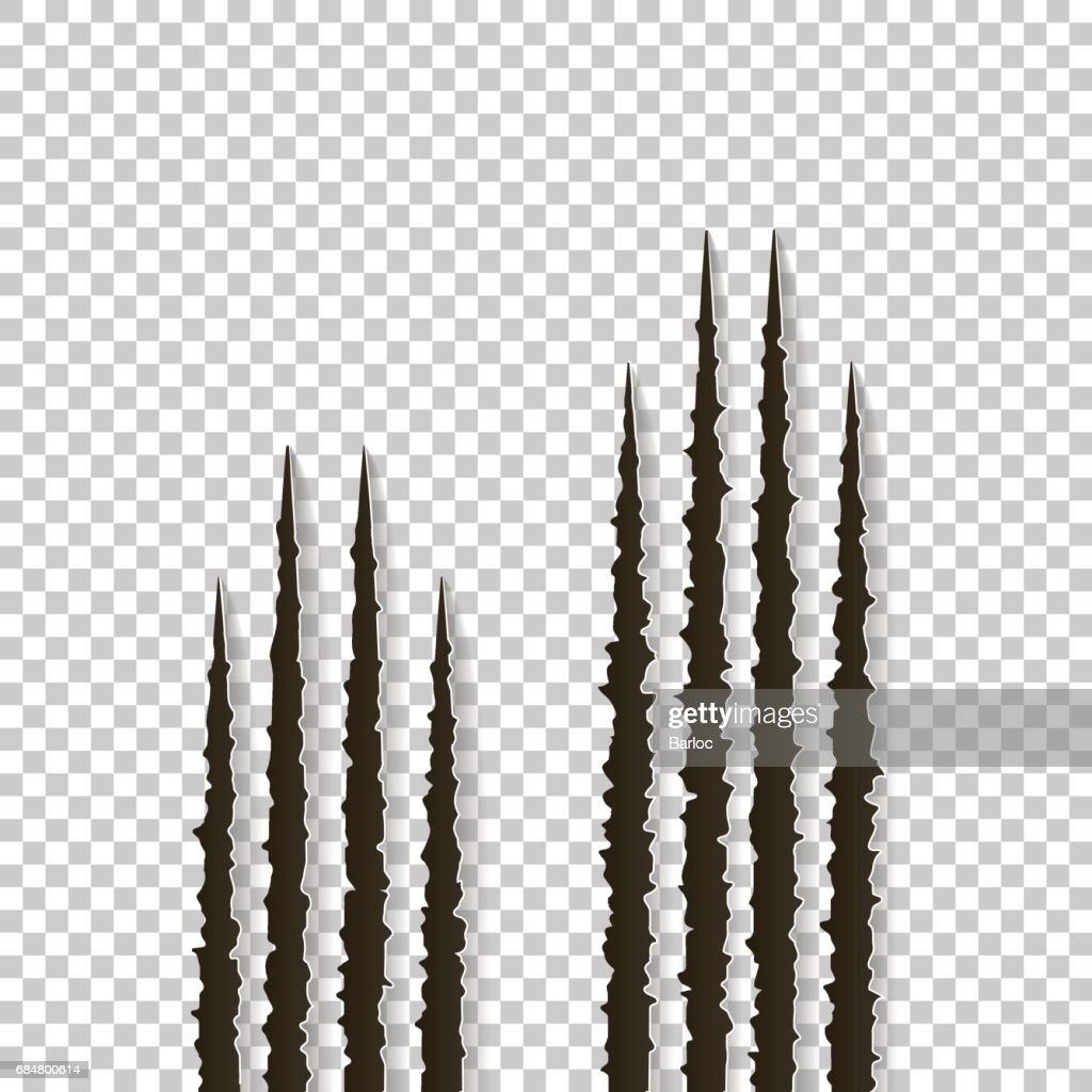 Claws scratches - vector isolated. Claws scratching animal cat, tiger, lion, bear illustration