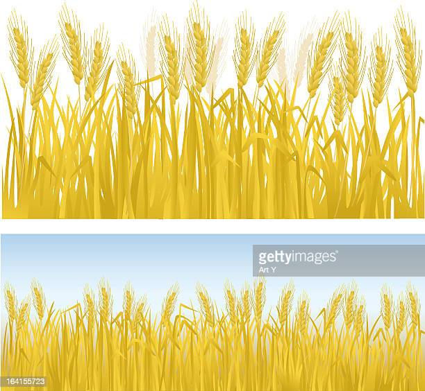 clip art of rows of golden wheat - field stock illustrations, clip art, cartoons, & icons