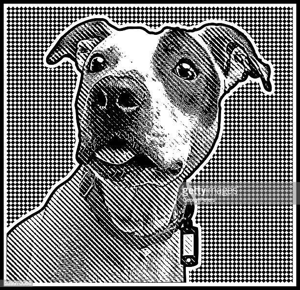 ilustraciones, imágenes clip art, dibujos animados e iconos de stock de acercamiento grabado retrato de un pit bull - pit bull terrier