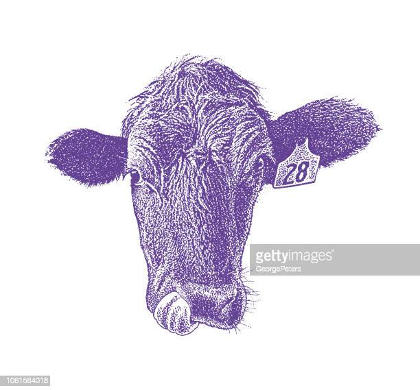 close up of a cow sticking out tongue - protruding stock illustrations