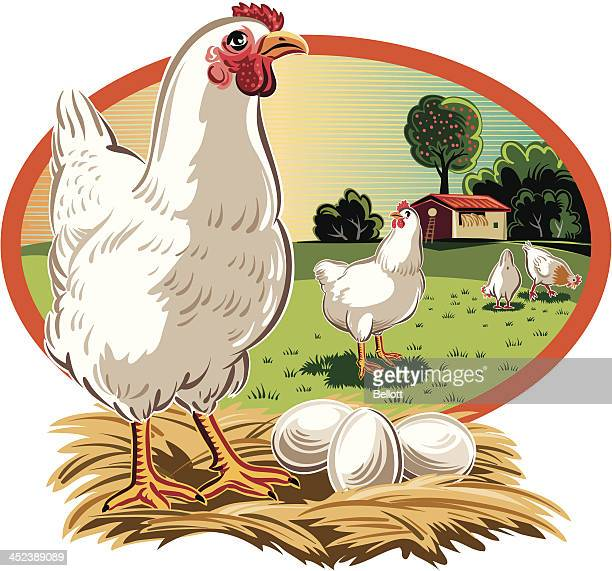 Close up of a hen with eggs looking at other hens in an oval