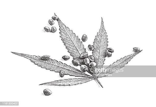 大麻の葉と種子のクローズアップ - 麻点のイラスト素材/クリップアート素材/マンガ素材/アイコン素材