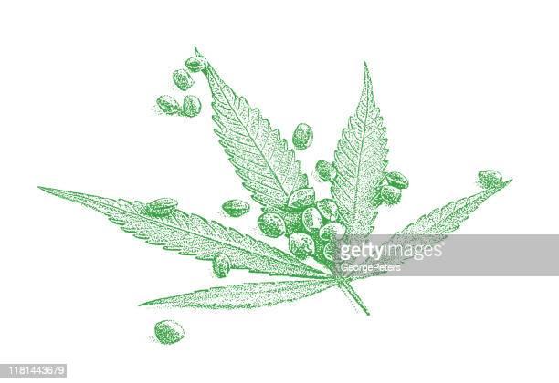 close up of cannabis leaf and seeds - marijuana leaf stock illustrations
