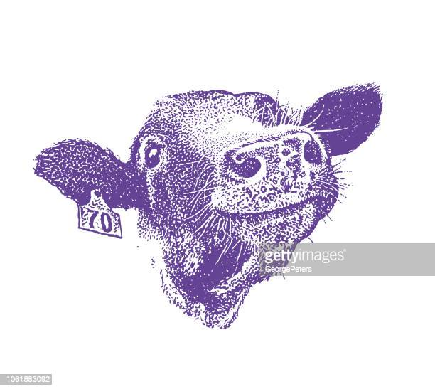 ilustraciones, imágenes clip art, dibujos animados e iconos de stock de cerca de la vaca sonriente feliz - vacas