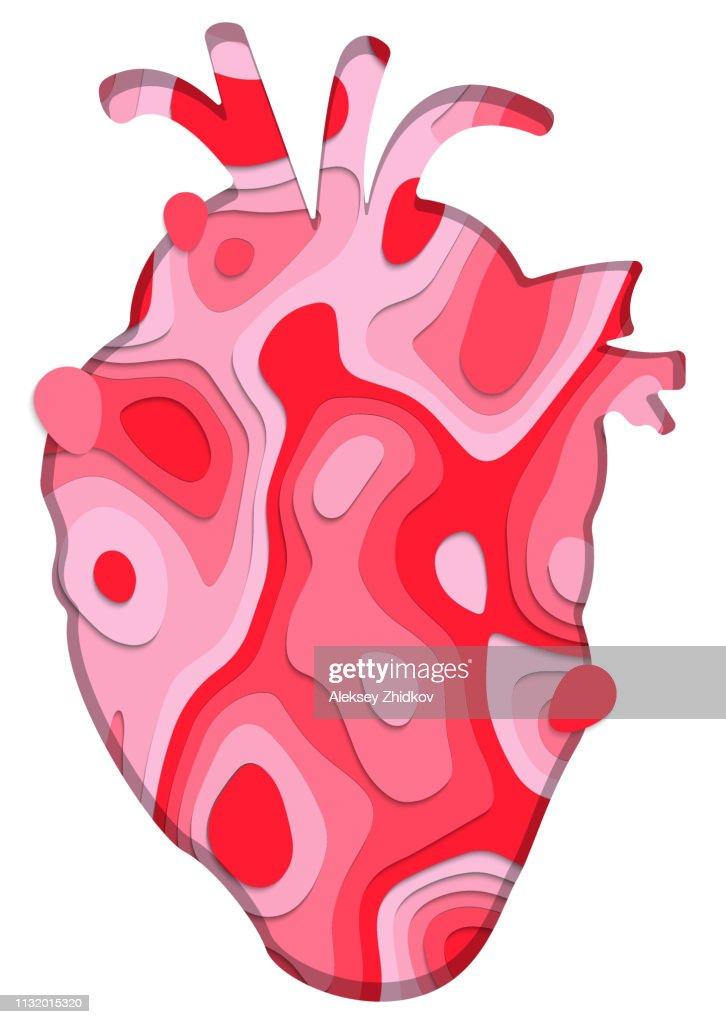 Close up of human heart