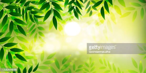 close-up nature view of green leaf on blurred greenery background in garden with copy space using - lush stock illustrations