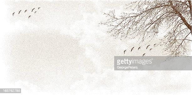 wolkengebilde mit baum und vögel - kanadagans stock-grafiken, -clipart, -cartoons und -symbole
