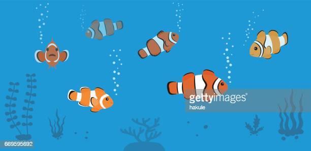 clown fish swimming in the sea