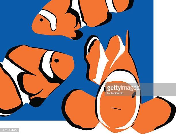 clown fish - anemonefish stock illustrations, clip art, cartoons, & icons