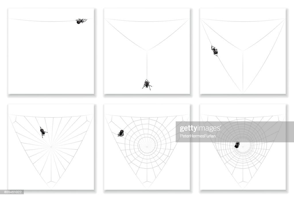 Cob Web Building Instruction In Six Steps Watch A Busy Black Spider