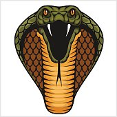 Cobra head - color illustration