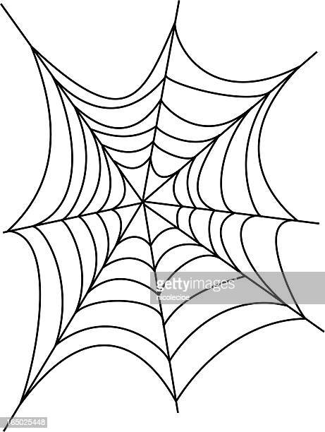 World's Best Spider Web Stock Illustrations - Getty Images