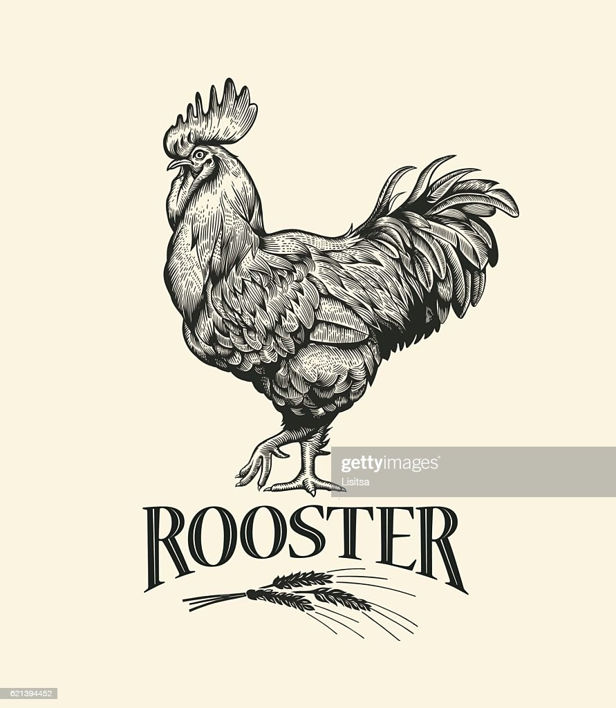Cock in Vintage engraving style. Rooster grunge label.