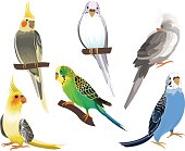 Cockatiels and Parakeets Hand Drawn Vector Set