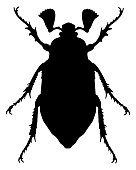 Cockchafer silhouette