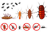 Cockroach species vector icons set. Signs for the control of insects. Illustration of beetles isolated on white background.