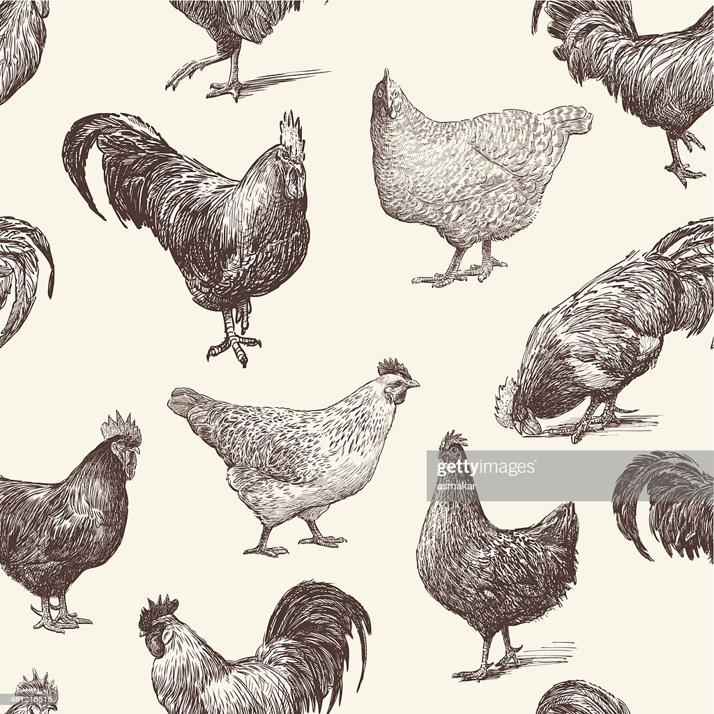 cocks and hens