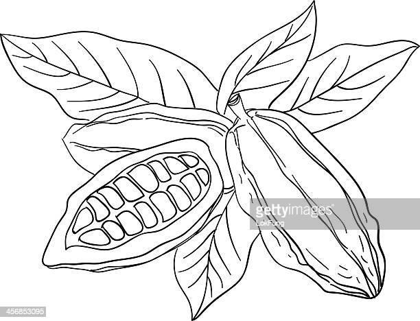 cocoa bean sketch illustration - husk stock illustrations, clip art, cartoons, & icons