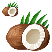 Coconut. Detailed Vector Icon isolated on white