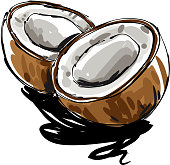 Coconut Drawing