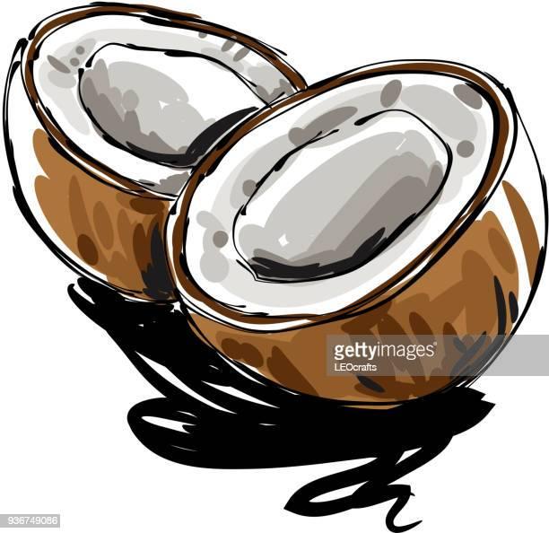 coconut drawing - coconut stock illustrations