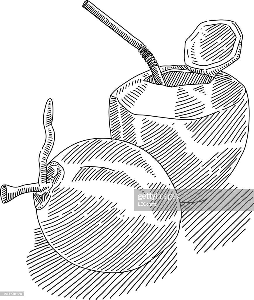 Coconut Drink Drawing Vector Art