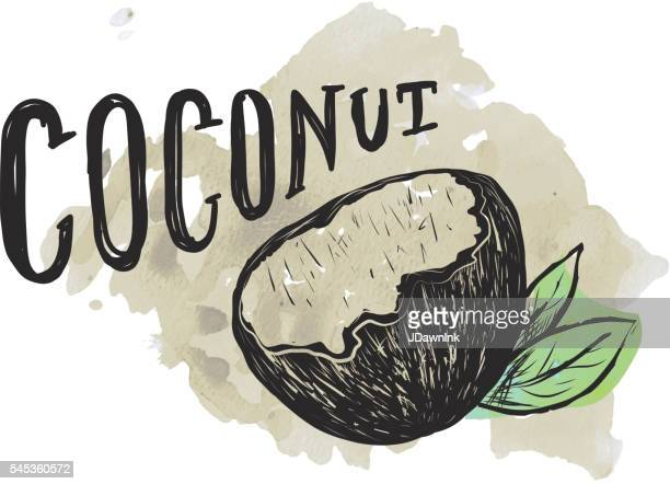 coconut hand lettering on watercolor background - coconut stock illustrations, clip art, cartoons, & icons