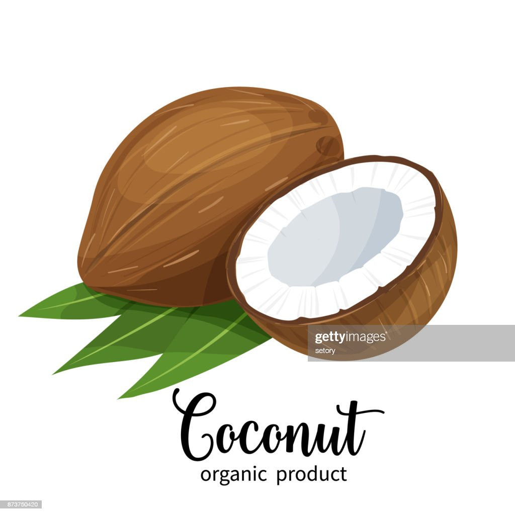 coconut in cartoon style