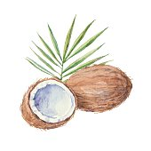Coconut  isolated on a white background.Vector, watercolor hand drawn  illustration.