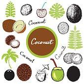 Coconut, leaves, palm tree