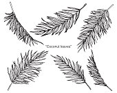 Coconut palm leaves by hand drawing and sketch with line-art on white backgrounds.
