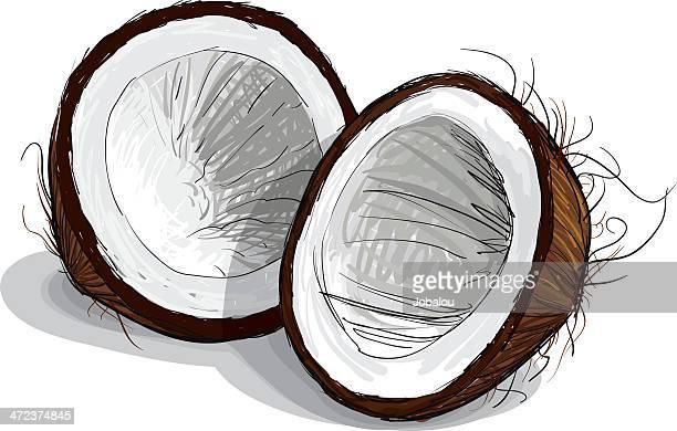 coconut sketch - coconut stock illustrations, clip art, cartoons, & icons
