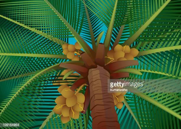 coconut tree - husk stock illustrations, clip art, cartoons, & icons