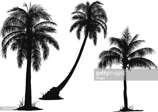 coconut tree - coconut palm tree stock illustrations, clip art, cartoons, & icons