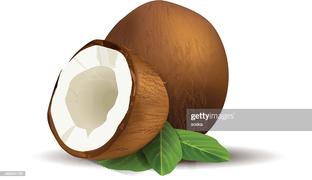 Coconut : Stock Illustration