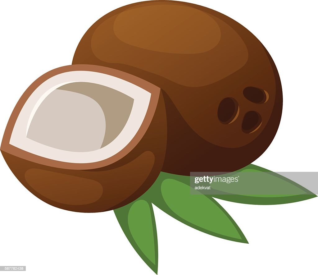 Coconut vector illustration isolated