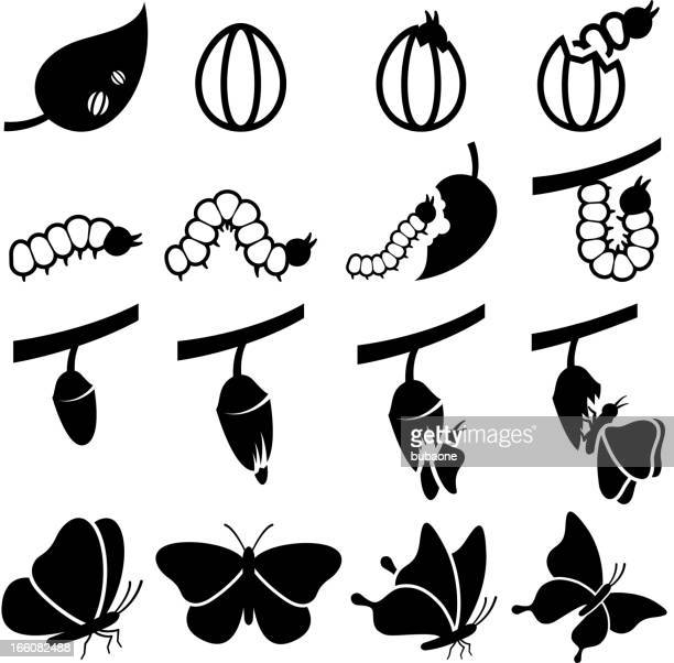 cocoon to butterfly life transformation process vector icon set - caterpillar stock illustrations