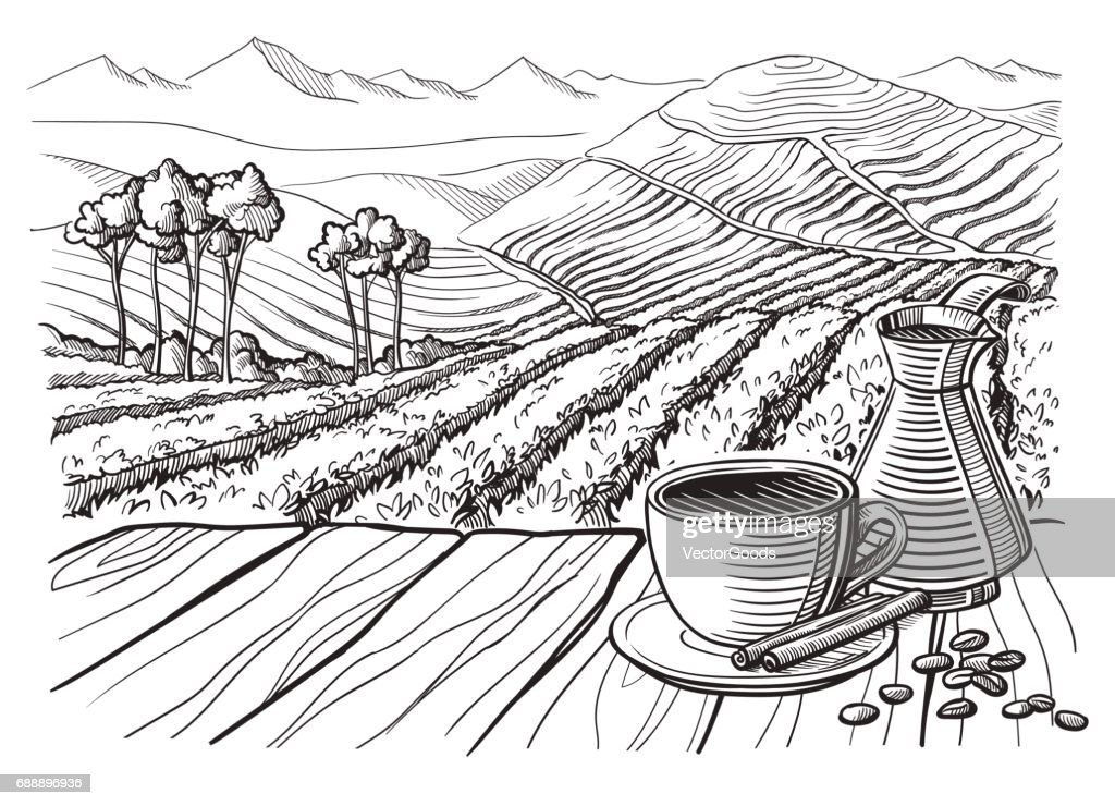 coffee plantation landscape