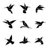 Colibri set. Vector