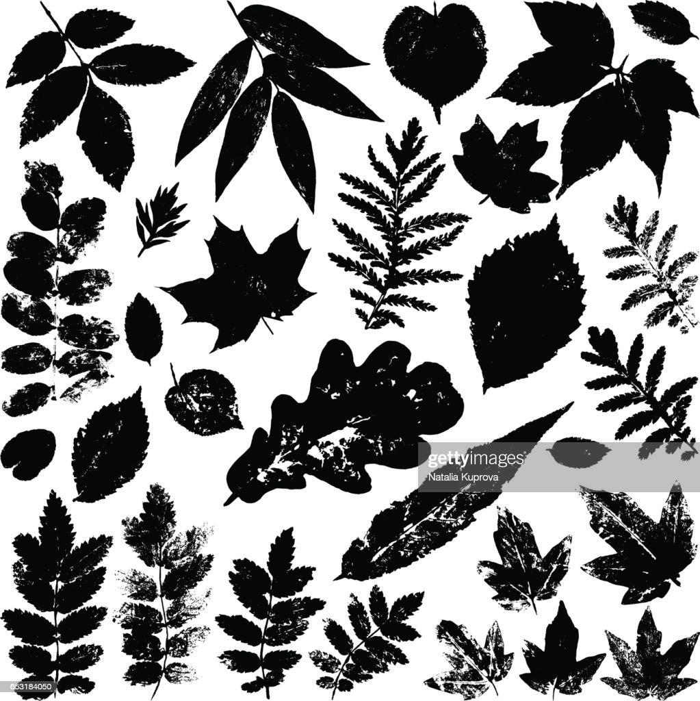 Collection black leaves isolated on white background. Vector grunge design elements.