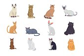 Collection Cats of Different Breeds. Vector isolated cats on white