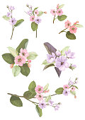 Collection of apple, (cherry, sakura, plum) pink, mauve flowers, spring blossom (bloom). Florets, branches, buds, green leaves on white background. Digital draw in watercolor style, vector