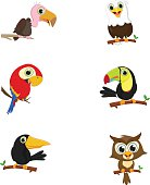 collection of cute birds on a tree branch